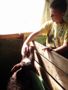 NÆRKONTAKT: Kontakt med dyra er en av de viktige ingrediensene i et opphold hos Gårdsliv på Tveide. (Foto: Privat)