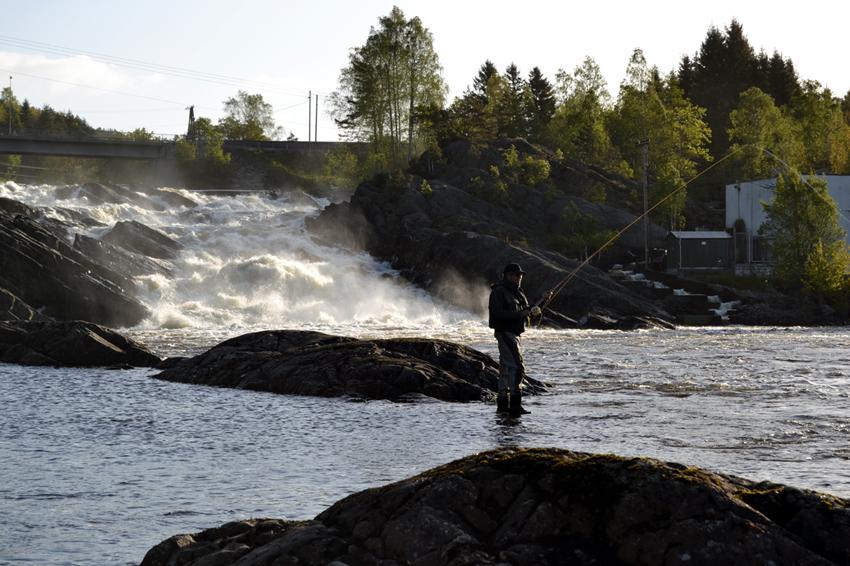 TIDLIG PÅ DAGEN, TIDLIG I SESONGEN: Boenfossen i Tovdalsleva er et vakkert syn en tidlig morgenstund. Sesongens første laksefiskere har holdt på i 4-5 timer allerede.