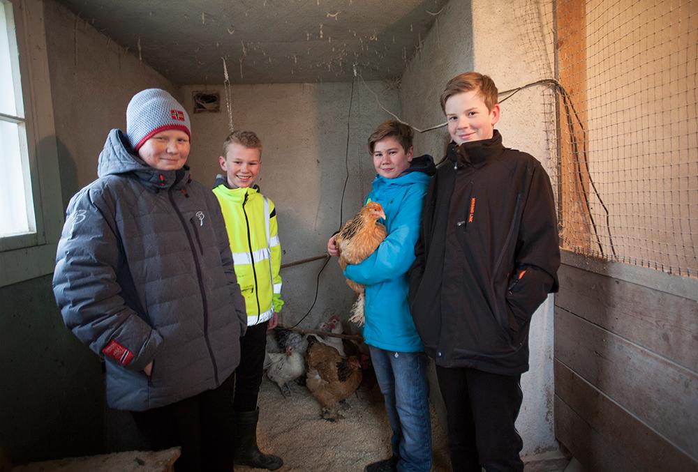 ARBEID: Mathias Endresen (14), Sander Herje (13), Kristian Murberg Hurlen (13) og Sondre Nes Aabel (13) driver elevbedriften Bjørkehaugen eggproduksjon. – Nå har vi akkurat byttet spon, forteller Murberg Hurlen.