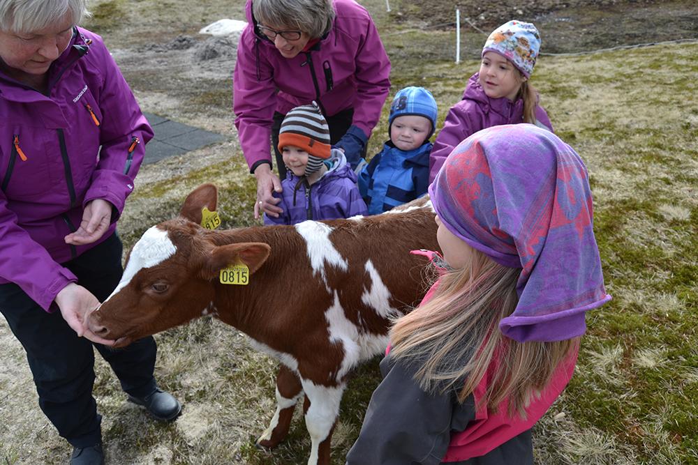GØY MED DYR: Guste (3), Håkon (2) og Sofie (4), synes det er gøy med besøk av dyr i barnehagen. – Vi har aldri klappet en kalv før, sier de.
