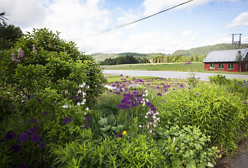 VARPELIA: Flere ganger har 69-åringen opplevd at turister stopper langs veien for å betrakte blomstene. – Det synes jeg bare er hyggelig, sier hun.