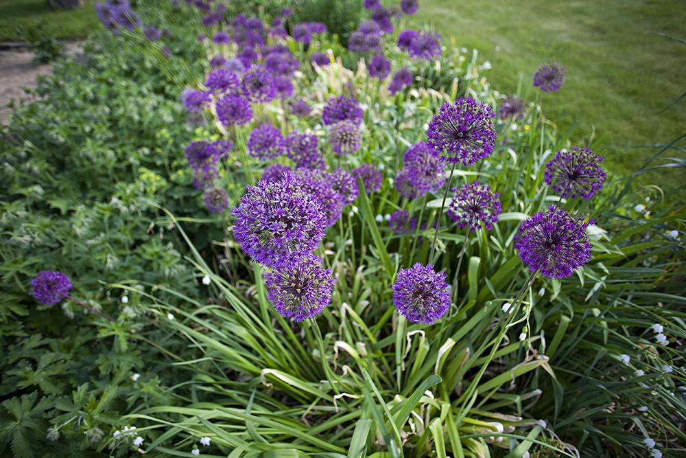 ALDRI KJEDELIG: Løland har alltid hatt en stor interesse for blomster og hagearbeid. – Jeg kjeder meg aldri når jeg får ha blomster rundt meg, sier hun.