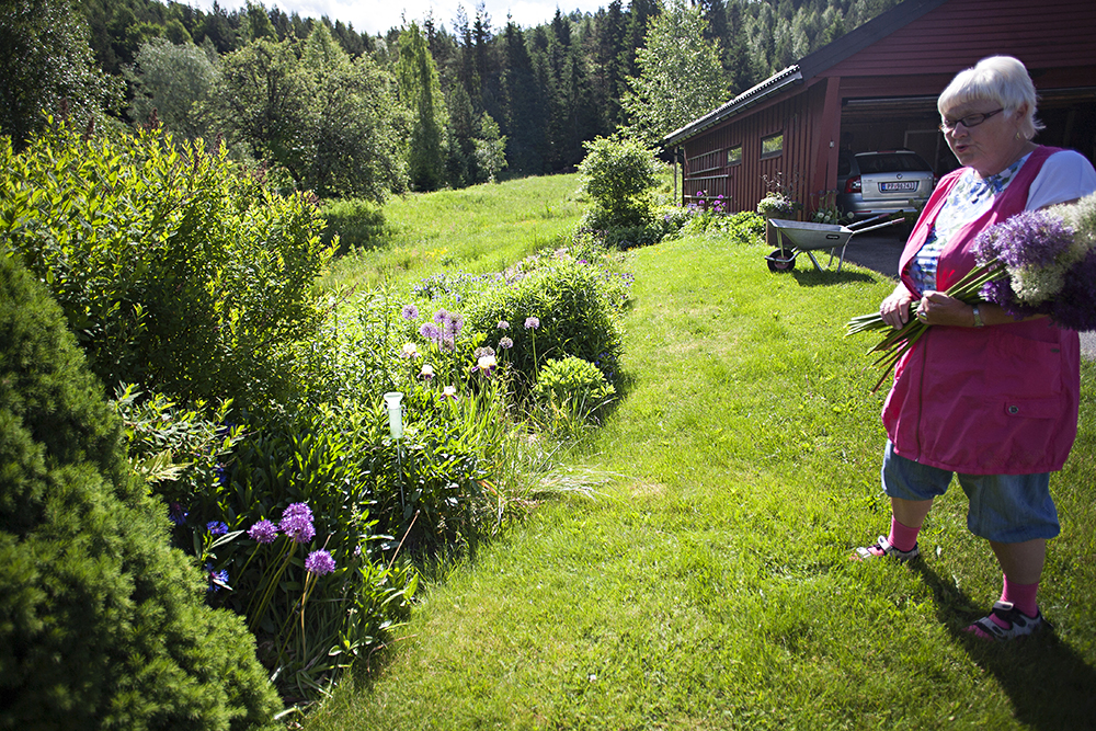 BESKJEDEN START: Her ble den første alliumløken satt, for 12 år siden. Nå har den lilla blomsten spredt seg over hele hagen.