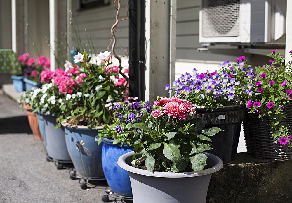 POTTER: Flere steder på tomta har 69-åringen dekorert med fargerike blomster i små og store potter.
